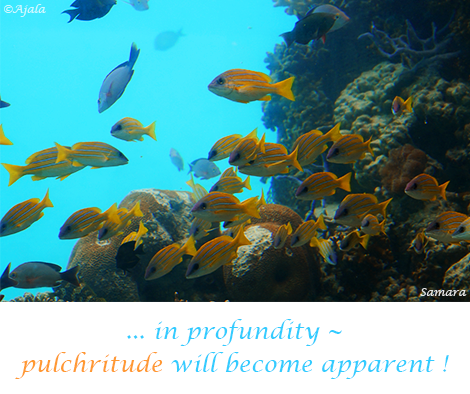 in-profundity--pulchritude-will-become-apparent