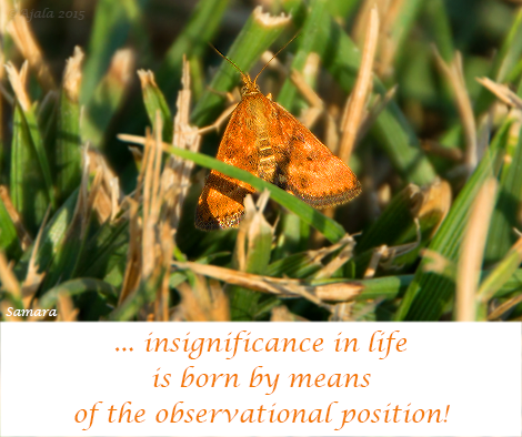 insigificance-in-life-is-born-by-means-of-the-observational-position