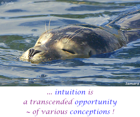 intuition-is-a-transcended-opportunity---of-various-conceptions