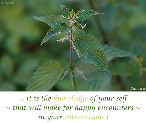 it-is-the-knowledge-of-your-self---that-will-make-for-happy-encounters---in-your-interactions