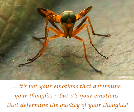 it-s-not-your-emotions-that-determine-your-thoughts--but-it-s-your-emotions-that-determine-the-quality-of-your-thoughts