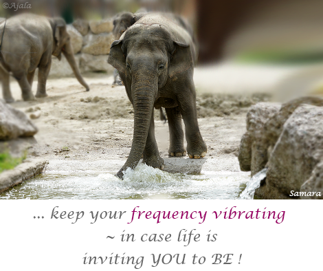 keep-your-frequency-vibrating--in-case-life-is-inviting-YOU-to-BE