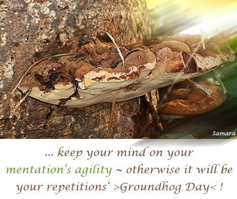 keep-your-mind-on-your-mentations-agility--otherwise-it-will-be-your-repetitions-Groundhog-Day