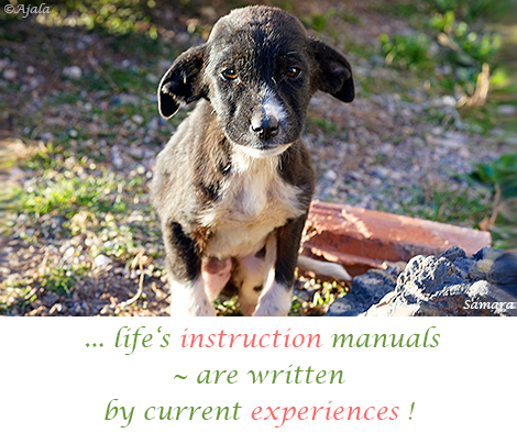 life-s-instruction-manuals--are-written-by-current-experiences