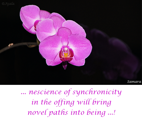 nescience-of-synchronicity-in-the-offing-will-bring-novel-paths-into-being