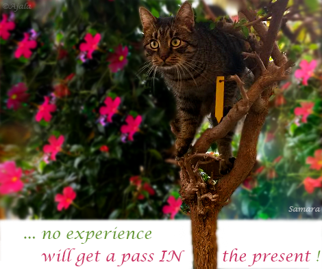 no-experience-will-get-a-pass-in-the-present