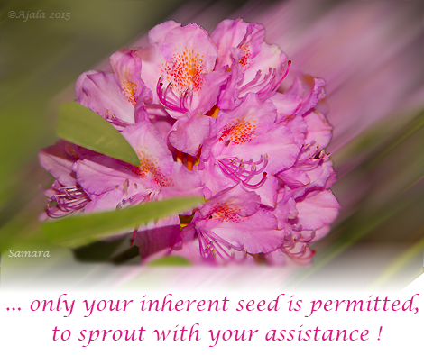 only-your-inherent-seed-is-permitted-to-sprout-with-your-assistance