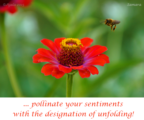 pollinate-your-sentiments-with-the-designation-of-unfolding
