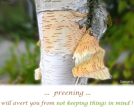 preening-will-avert-you-from-not-keeping-things-in-mind