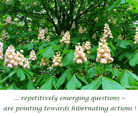 repetitively-emerging-questions--are-pointing-towards-hibernating-actions