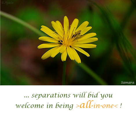 separations-will-bid-you-welcome-in-being-all-in-one