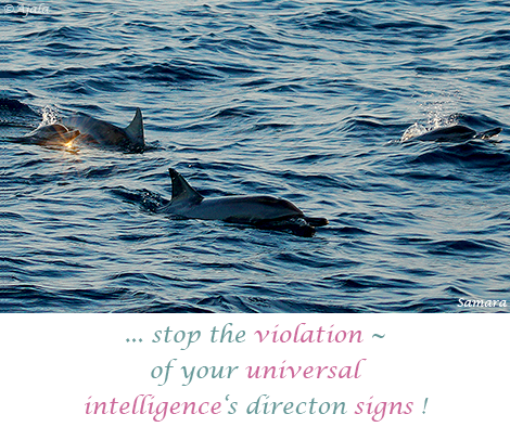 stop-the-violation--of-your-universal-intelligence-s-directon-signs