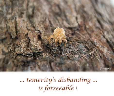 temerity-s-disbanding-is-foreseeable