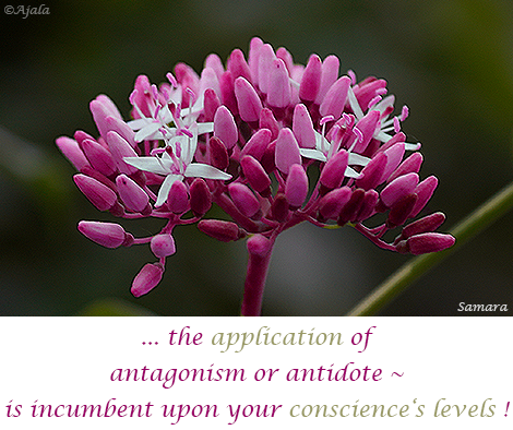 the-application-of-antagonism-or-antidote--is-incumbent-upon-your-conscience-s-levels