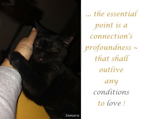 the-essential-point-is-a-connection-s-profoundness--that-shall--outlive-any-conditions-to-love