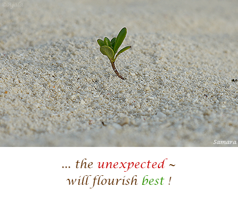 the-unexpected--will-flourish-best