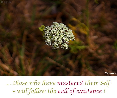 those-who-have-mastered-their-Self--will-follow-the-call-of-existence