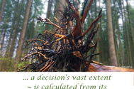a-decision-s-vast-extent--is-calculated-from-its-interest-s-sophisticationt