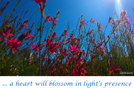 a-heart-will-blossom-in-light-s-presence--open-up-in-colors