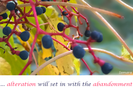 alteration-will-set-in-with-the-abandonment-of-your-distinct-interpretive-patterns