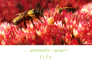 animate-your-life-without-staying-inside-the-system
