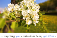 anything-you-establish-as-being-spiritless--will-not-attain-transcendency-in-fortitude