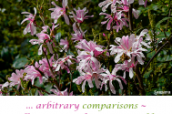 arbitrary-comparisons-will-encounter-the-incomparable