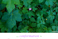 conformation--will-aspire-for-personal-stagnation