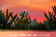 disappointments-are-advisors-for-your-personal-advancement