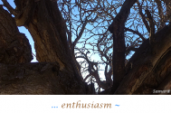 enthusiasm--is-awakened--in-value-freedom