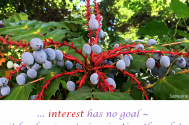 interest-has-no-goal--it-lends-wings-to-inspiration-though