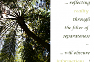 reflecting-reality-through-the-filter-of-separateness--will-obscure-informations
