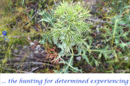 the-hunting-for-determined-experiencing--will-run-away-devoid-of-constraint