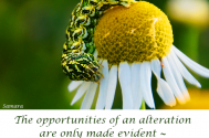 the-opportunities-of-an-alteration-are-only-made-evident--your-are-willing-to-accept-help