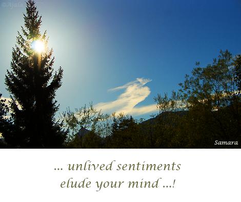 unlived-sentiments-elude-your-mind