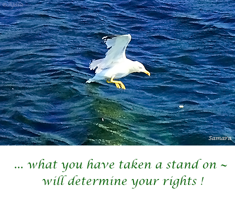 what-you-have-taken-a-stand-on--will-determine-your-rights