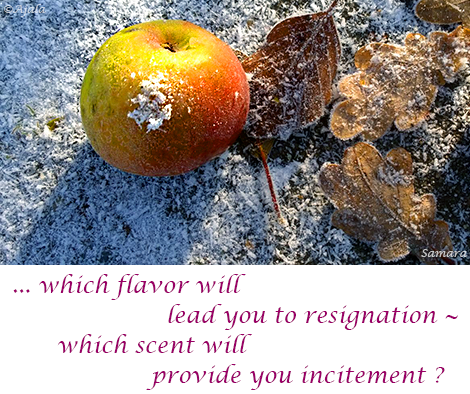 which-flavor-will-lead-you-to-resignation--which-scent-will-provide-you-incitement