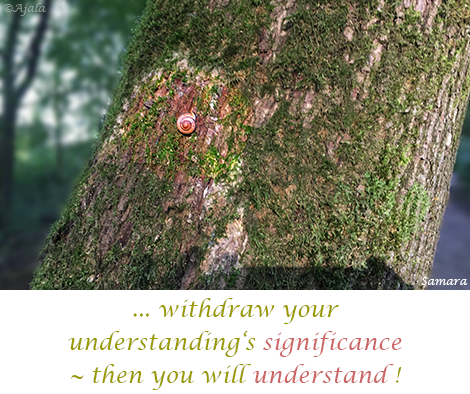 withdraw-your-understanding-s-significance--then-you-will-understand
