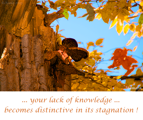 your-lack-of-knowledge-becomes-distinctive-in-its-stagnation
