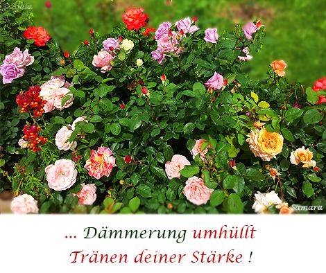 Daemmerung-umhuellt-Traenen-Deiner-Staerke