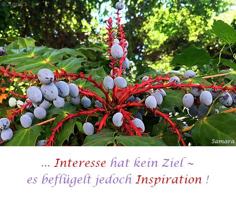 Interesse-hat-kein-Ziel--es-befluegelt-jedoch-Inspiration