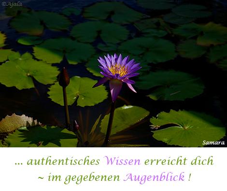 authentisches-Wissen-erreicht-dich--im-gegebenen-Augenblick