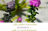fuer-jeden-toxischen-Gedanken--gibt-es-auch-heilende-Gedanken