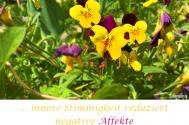 innere-Stimmigkeit-reduziert-negative-Affekte--der-Selbsttaeuschung