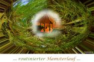 routinierter-Hamsterlauf-entfernt-sich-von-systemischen-Fragen