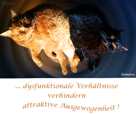 dysfunktionale-Verhaeltnisse-verhindern-attraktive-Ausgewogenheit