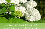 Inkarnationen-dienen-nicht-zur-desorientierten-Reaktionen--gestalte-im-Agieren