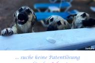 suche-keine-Patentloesung---fuer-das-Leben