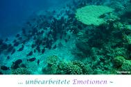 unbearbeitete-Emotionen--erschliessen-ungewollte-Handlungen